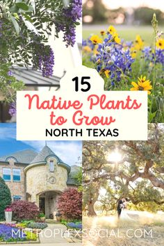 Native plants mean low maintenance, less water, and higher chances of success. It just makes sense. Here's the Top 15 Texas Native Plants that Will Make Your Home Look Stunning. Texas Gardening, Vegetable Gardening, Container Gardening, Texas Landscaping, Landscaping Plants, Landscaping Ideas, Texas Plants, Prairie Garden, Drought Tolerant Landscape