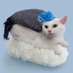 Sushi Cats, Cute Cats Resting on Sushi Rice