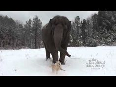 ▶ Tarra and Bella in the Snow