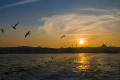 istanbul, the city of seagulls