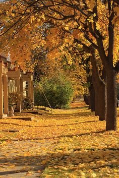 Studio Background Images, Autumn Scenes, Country Roads, Explore, Landscape, Fall, Photography, Halloween, Colors