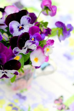I love pansies and the way they smell !