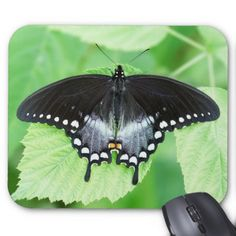 Spicebush Swallowtail Butterfly Mousepad - black gifts unique cool diy customize personalize