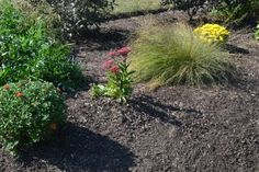 New and old perennials mingle together and prepare for fall.