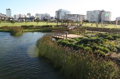 indigenous Cape wetland section of the Biodiversity Showcase Garden in Cape Town. South Africa. Cape Town. Designed by OvP Associates.