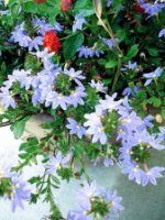Ideas For Container Gardening: Get Inspired Today!