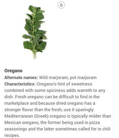Oregano herbs and spices identification