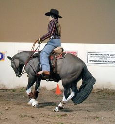 Model reining horse and rider - might be doing a roll back. The rider should be sitting back a little more, but I think it a a amazing shot. I am not sure what place it should get.FIRST---- THIRD