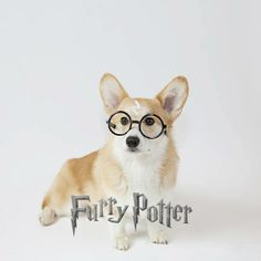 Furry Potter