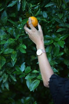 Eco Product Review: 2°EAST Eco-Friendly Watches Sustainable Fashion, Sustainable Style, Eco Beauty, Ethical Fashion Brands, Fancy Schmancy, Fair Trade Fashion, Eco Friendly Fashion, Green Gifts, Product Review