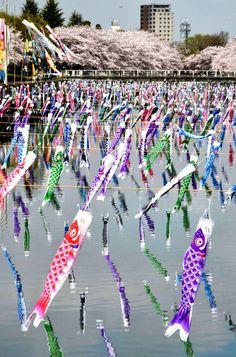 5.000 koinobori volent sur la rivière Tsuruuda sur fond de cerisiers en fleur à Tatebayashi, le 2 avril au Japon.
