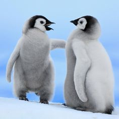 """""""Come at me bro!"""" #penguins"""
