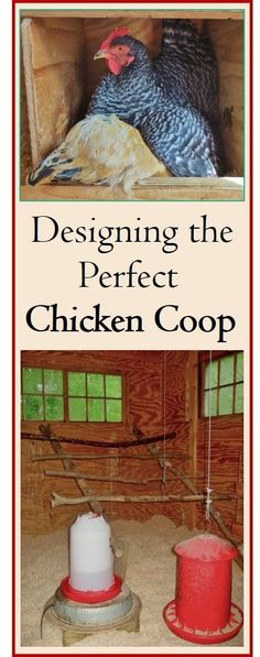 Thorough and organized, this guide will help you design the ultimate chicken coop: convenient for you, and spacious and comfortable for the birds. Covered in detail are 15 items, such as space, nest boxes, roosts, windows, runs, and more. Plenty of photos for ideas. Also a word on chicken runs and yards. Whether you keep a few birds or a larger flock, the important principles are the same. Chicken Coup, Best Chicken Coop, Chicken Coop Plans, Building A Chicken Coop, Chicken Tractors, Chicken Roost, Chicken Life, Chicken Houses, Chicken Pen