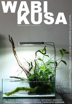Another well-grown wabi ball (or two?) ronbeckdesigns:  Aquascaping - Wabi kusa