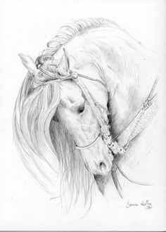 Beautiful Andalusian Horse Original Pencil Drawing A4 by iCr8, £49.99