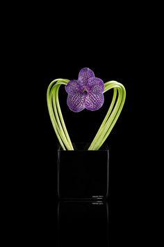 Calla stems and purple vanda orchid on black glass vase Armani/Fiori Silk Flower Arrangements, Flower Vases, Tiny Flowers, My Flower, Modern Floral Design, Vanda Orchids, Corporate Flowers, Purple Themes, Church Flowers