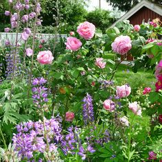 Mias Landliv is my favorite blog and her gardens are beautiful!
