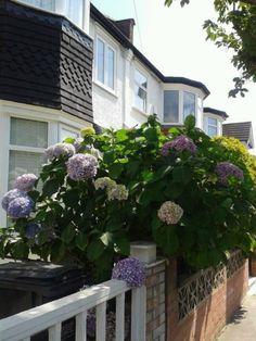 hortenzia18 Plants, Plant, Planets