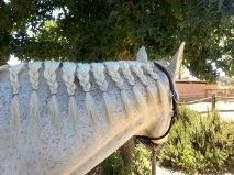 Keep your horse's long mane nice!  http://www.proequinegrooms.com/index.php/tips/manes-and-tails/growing-a-long-mane/