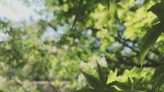 �� 힐링되네��(#healing)#iphone7plus #flowers#flowerslovers . . . #꽃#풍경#자연##스냅#일상#꽃스타그램#풍경스타그램#포토#사진#오후#햇살#감성#느낌#nature#naturelove #naturegram #natureporn #naturelovers #landscape #flowerstagram #pictureoftheday #flower#flowerporn #snap#photo #picture http://gelinshop.com/ipost/1524593104765525541/?code=BUocVnkjx4l