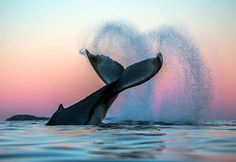 www.pegasebuzz.com | Whale in the Arctic water by Audun Rikarsen.