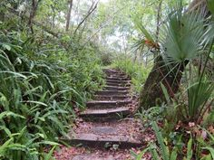 Ravine Gardens State Park is a State Park in Palatka. Plan your road trip to Ravine Gardens State Park in FL with Roadtrippers. Hiking In Florida, Florida Trail, Places In Florida, Visit Florida, Florida Living, Florida Vacation, Tennessee Vacation, Central Florida, Gardens