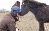 O GRITO DO BICHO: Vídeo emocionante: homem resgata cavalo, que faz g...