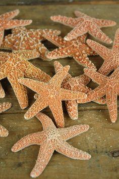 14.99 SALE PRICE! This bundle of twelve Sugar Starfish is an essential addition…