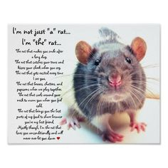 "I'm Not Just ""a"" Rat"