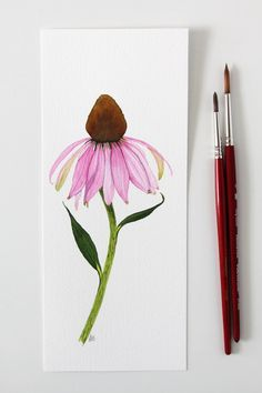 """Echinacea or purple coneflower is one of those flowers that is the epitome of summer. The pollen-filled center """"cone"""" is surrounded by a flutter of pink petals and is irresistible to butterflies and b Realistic Rose, Realistic Drawings, Love Drawings, Watercolor Bookmarks, Watercolor Flowers, Watercolor Art, Acrylic Painting Flowers, Flower Art Drawing, Plant Drawing"""