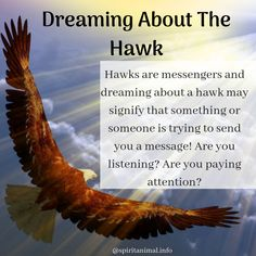 Hawk Spirit Animal When you have the hawk as a spirit animal, you may have an inclination towards using the power of vision and intuition in your daily life. The hawk totem provides wisdom about seeing Hawk Spirit Animal, Animal Spirit Guides, Your Spirit Animal, Spiritual Love, Spiritual Awakening, Dream Psychology, Power Of Vision, Animal Meanings, Dream Symbols