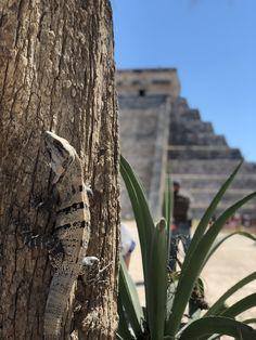 Chichen Itza Mayan Pyramid- 7 wonders of the world, Yucatan Peninsula, Cancun, Mexico Mexico Destinations, Travel Destinations, Cancun Mexico, Mexico Travel, Snorkeling, Wonders Of The World, Palm Trees, Wander, Road Trip Destinations