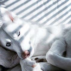 Imagem de dog, white, and animal