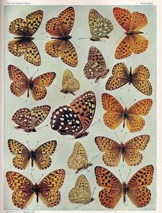Free printable butterfly images.