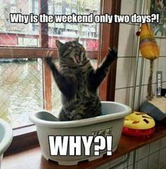 why indeed, 2 days is too short | TrendUso #cat #cats #silly #goofy #funny #fun #funniness #hilarious #humor #humorous #humour #meme #memes #memesdaily #lol #wtf #omg #Rofl #smh #haha #true #truth #relatable #animal #animals #pet #pets