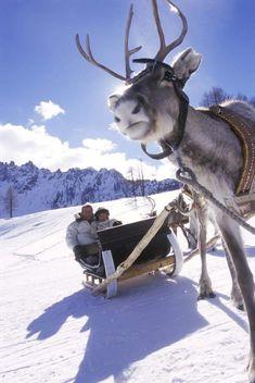 Chcete se dozvědět, proč sobi tráví zimní dovolenou na sjezdovkách Hochpustertalu/Alta Pusteria? I to se možná dočtete v onlinovém magazínu Dolomity: http://www.suedtirol.info/magazindolomity/#/hochpustertal_intro