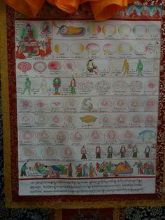 Tibetan medicine - reproduction  2011