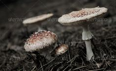 Toadstools in group 2