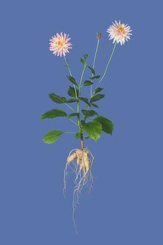 http://www.ignant.de/2012/11/02/new-botanicals/