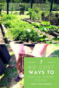 7 No-Cost Ways to Grow More Food From Your Garden - Gardening can can really take a toll on your wallet! Why spend a lot of money when you can either make your own or re-purpose items you may already have?
