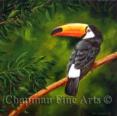 "Toucan, 12 x 12"" oil http://fineartamerica.com/art/all/tom+chapman/all"