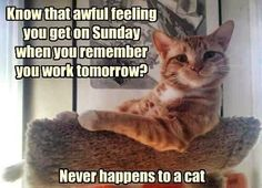 Oh to be a cat!