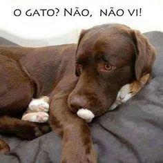 """956 Likes, 13 Comments - Canal do Gato (@canaldogato) on Instagram: """"Protegendo o amiguinho da bronca  #posseresponsavel #gatos #gateiras #gatos #cats #canaldogato…"""""""