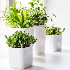 Eden pots by Pentagon Design for Orthex.