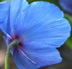 Beautiful Baby Blue by Jan Kelly 01, via Flickr