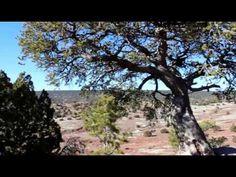 Tsehootsooi, Arizona Hiking to the Meditation Tree for Prayers.