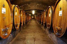 BADIA A COLTIBUONO, Gaiole in Chianti, Tour for 6 EUR pp, no reservartion, Biologische Weine von einem großem Traditionsweingut, das in einer sehenswerten Badia gegründet wurde. Emanuela Stucchi-Prinetti und ihr Bruder Roberto führen das Erbe würdevoll und zielstrebig fort.