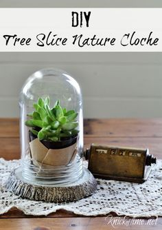 DIY Concrete Tree Slice Nature Cloche - Knick of Time
