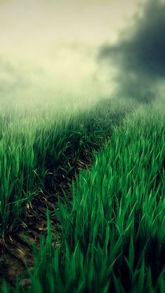 Nature iPhone 6 Plus Wallpapers - Foggy Grass Field Path iPhone 6 Plus HD Wallpaper Hd Wallpaper Android, Iphone 6 Plus Wallpaper, 4k Wallpaper For Mobile, Whatsapp Wallpaper, Screen Wallpaper, Phone Backgrounds, Wallpaper Backgrounds, Iphone Wallpapers, Retina Wallpaper