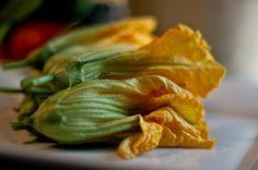 More on the squash blossom (flor de calabaza)  debate... squash blossom flickr kelso.jpg